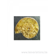 Fossile ammonite brun clair aspect poli